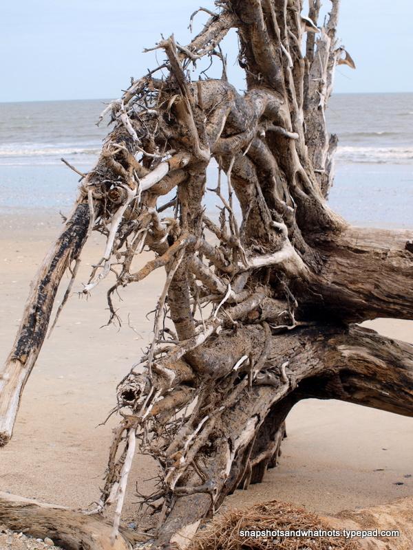 Edisto Beach (7)