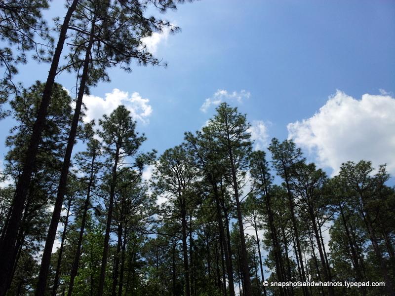 Harbison State Park (6)