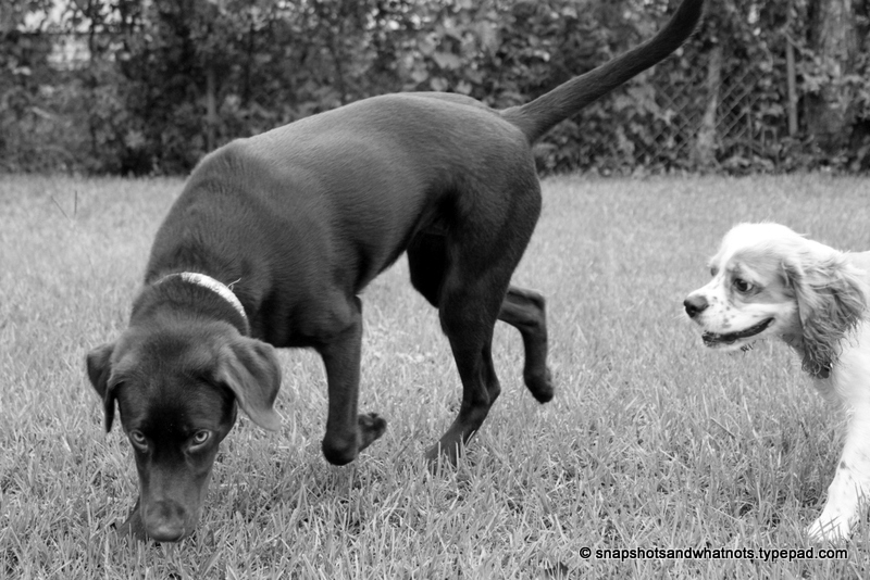 Puppy playdate (2)