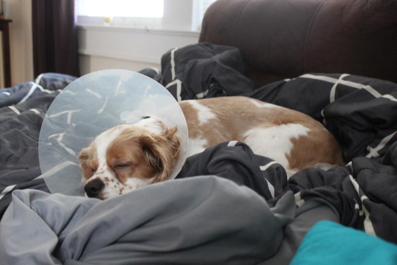 Resting puppy (1)