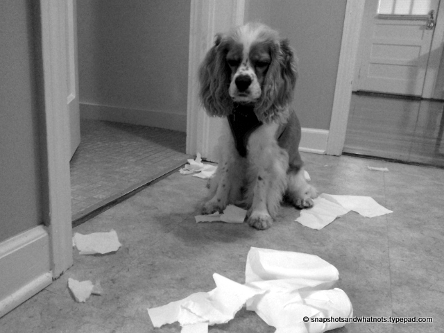 Puppy versus toilet roll#