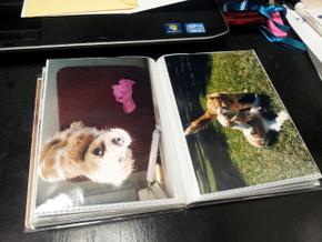 Homemade photo book of Boomer (11)