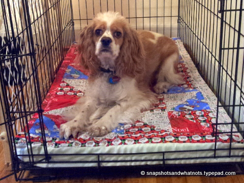 Beginner sewing project - quilted top turned DIY dog bed (6)