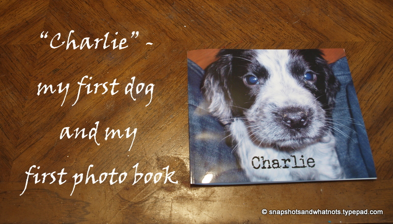 Blurb photo book - charlie the cocker spaniel (1)