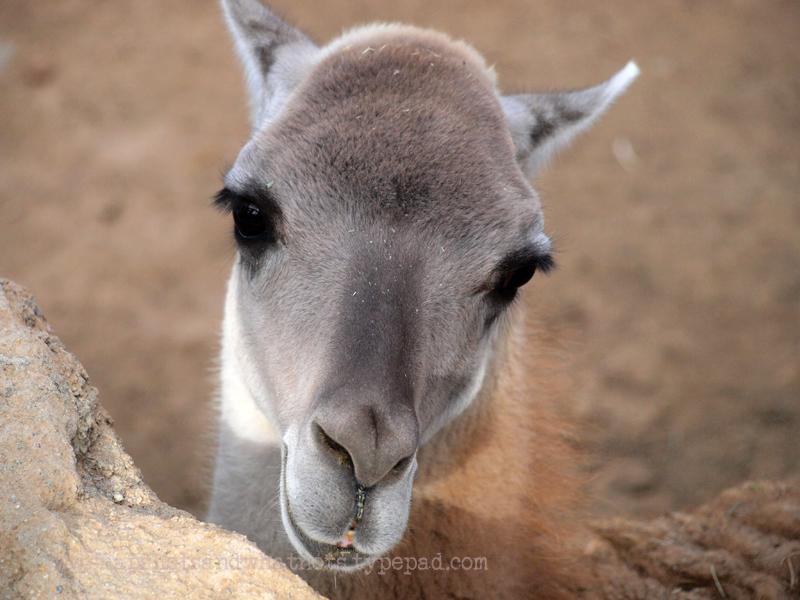 San Diego Zoo - snapshotsandwhatnots