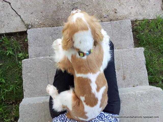 Cuddles with my puppy