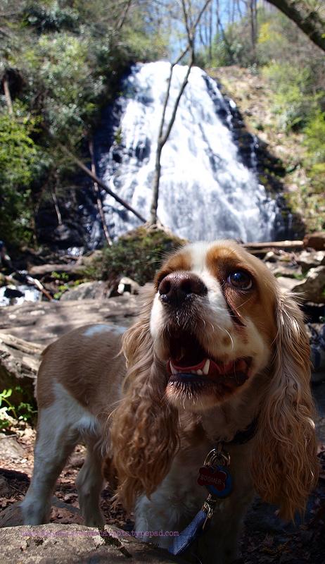 Crantree Falls (3)