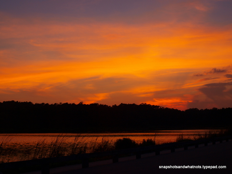 Huntington Beach  State Park - South Carolina - snapshotsandwhatnots (8)