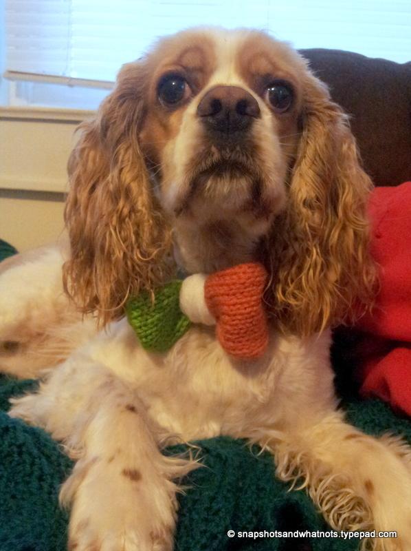 St Patricks Day 2014 - puppy in a bowtie (3)