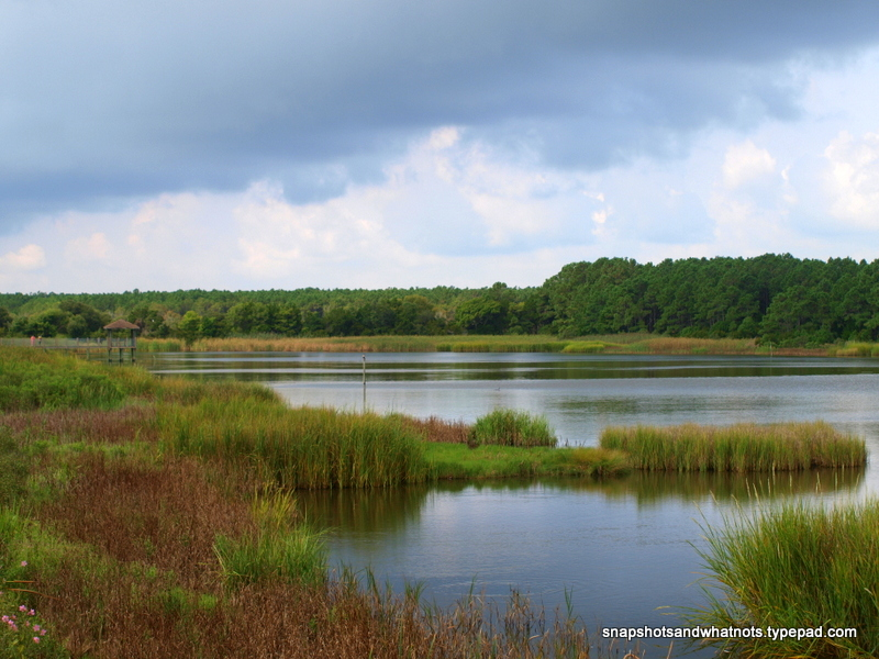 Huntington Beach  State Park - South Carolina - snapshotsandwhatnots (5)