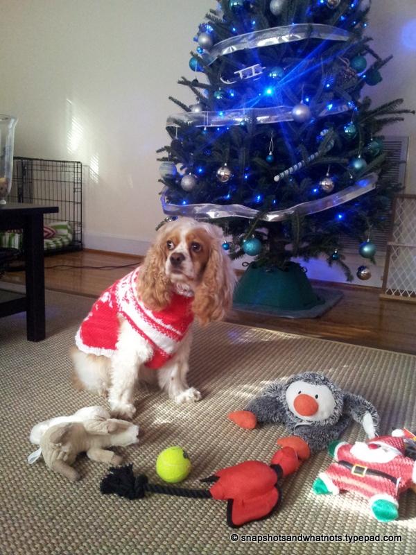 Christmas 2014 (4)
