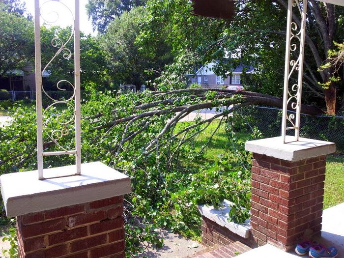 Fallen tree in yard