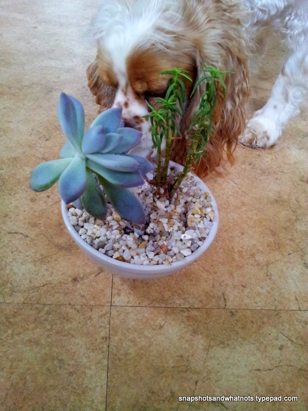 Propagating succulents (4)