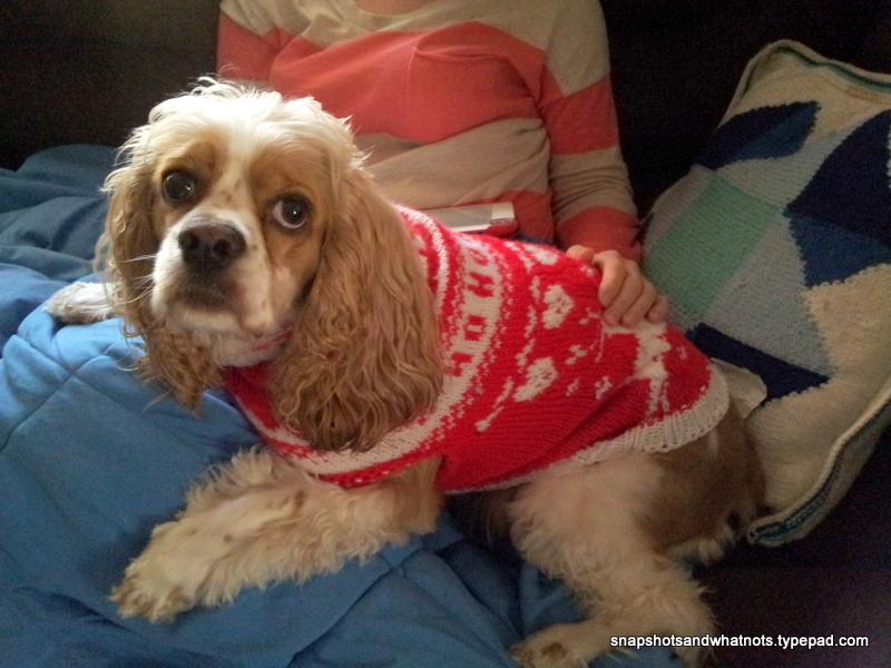 A knitted fair isle doggie christmas sweater (1)