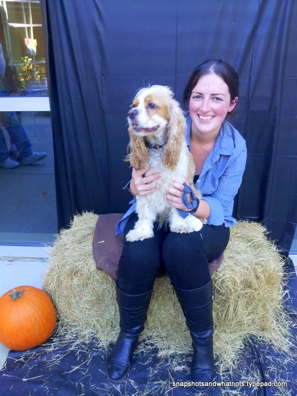 Howloween dog party - cocker spaniel (3)